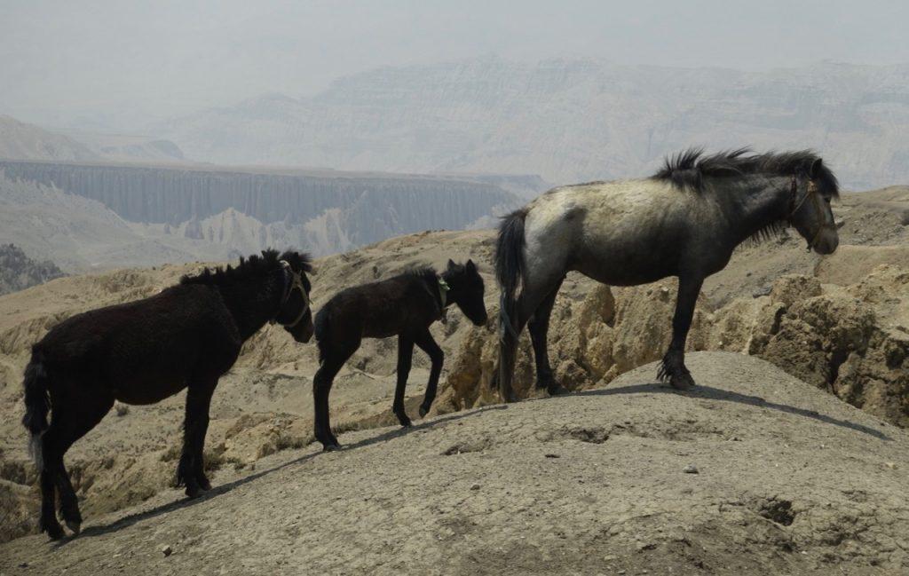 ghara-horses-1